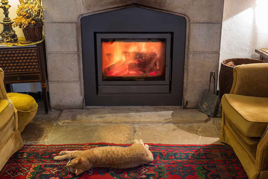 cat is basking by the fireplace in the cozy room